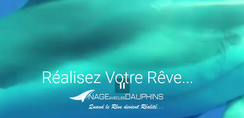 Nager avec des dauphins au départ de la Côte d'Azur… !