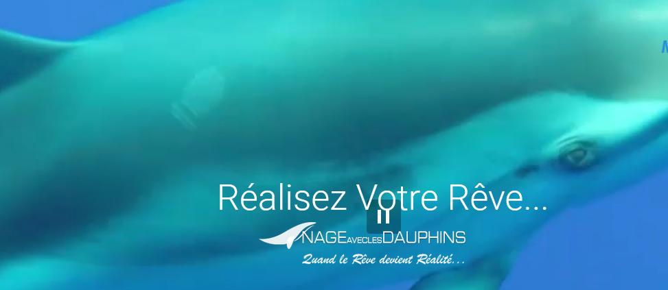 Aventure inoubliable en Côte d'Azur : aller nager avec des cétacés sauvages !